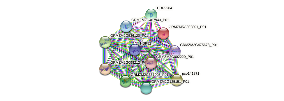 GRMZM5G802801_P01 protein (Zea mays) - STRING interaction network
