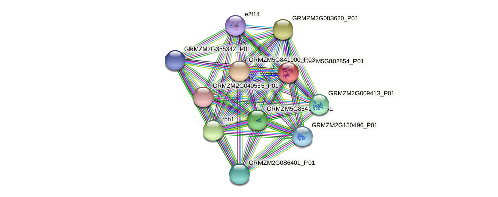 100282437 protein (Zea mays) - STRING interaction network
