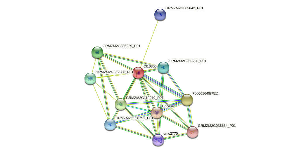 GRMZM5G802881_P01 protein (Zea mays) - STRING interaction network