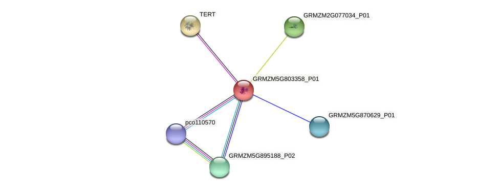 GRMZM5G803358_P01 protein (Zea mays) - STRING interaction network