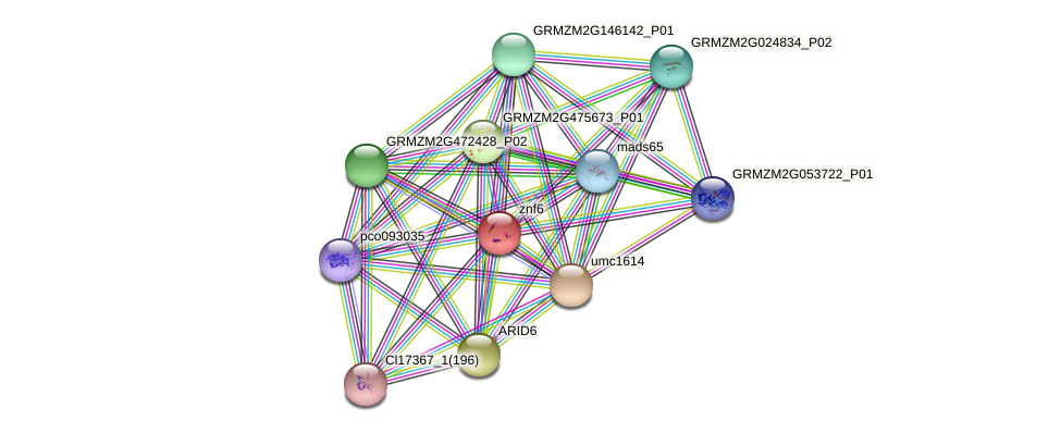 GRMZM5G804618_P01 protein (Zea mays) - STRING interaction network