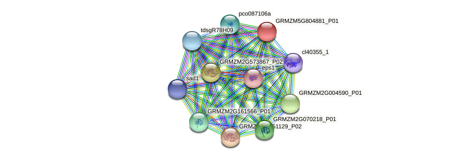 GRMZM5G804881_P01 protein (Zea mays) - STRING interaction network