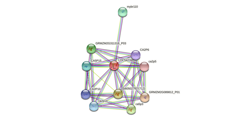 NFY2 protein (Zea mays) - STRING interaction network