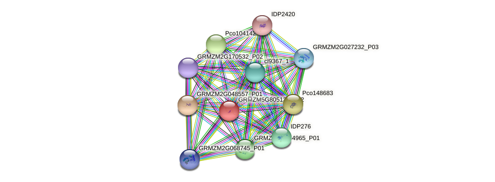 GRMZM5G805134_P02 protein (Zea mays) - STRING interaction network