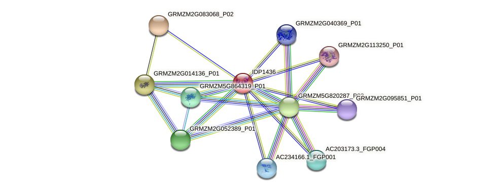 IDP1436 protein (Zea mays) - STRING interaction network