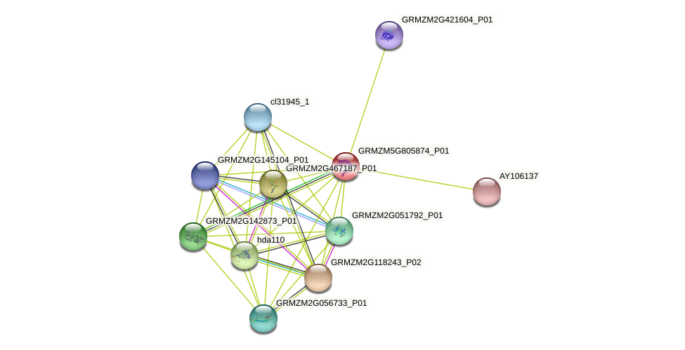 GRMZM5G805874_P01 protein (Zea mays) - STRING interaction network