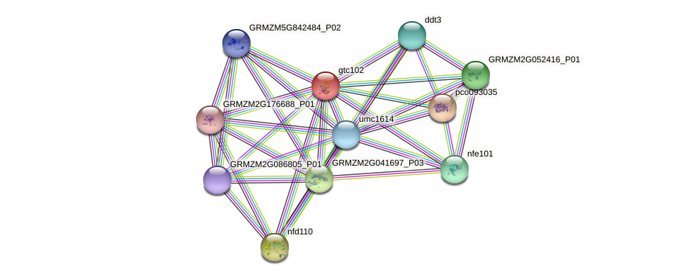 SPT16 protein (Zea mays) - STRING interaction network