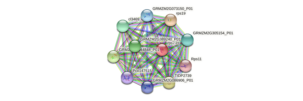 GRMZM5G806488_P01 protein (Zea mays) - STRING interaction network