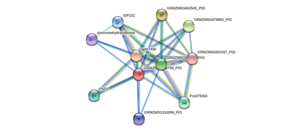 GRMZM5G806784_P02 protein (Zea mays) - STRING interaction network