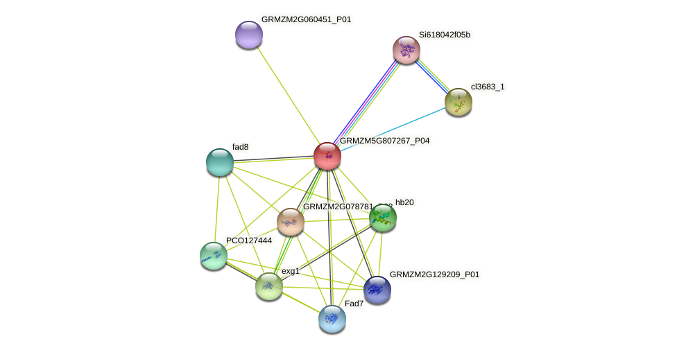 GRMZM5G807267_P04 protein (Zea mays) - STRING interaction network