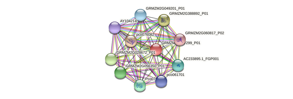 GRMZM5G807299_P01 protein (Zea mays) - STRING interaction network