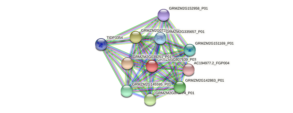 GRMZM5G807639_P03 protein (Zea mays) - STRING interaction network