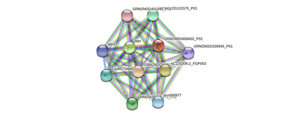 atpB protein (Zea mays) - STRING interaction network