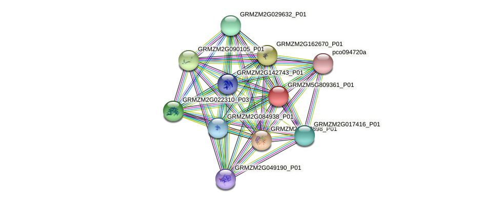 GRMZM5G809361_P01 protein (Zea mays) - STRING interaction network