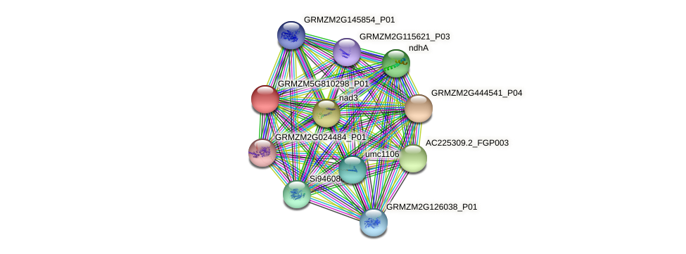 GRMZM5G810298_P01 protein (Zea mays) - STRING interaction network