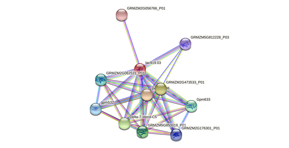 tac919.03 protein (Zea mays) - STRING interaction network