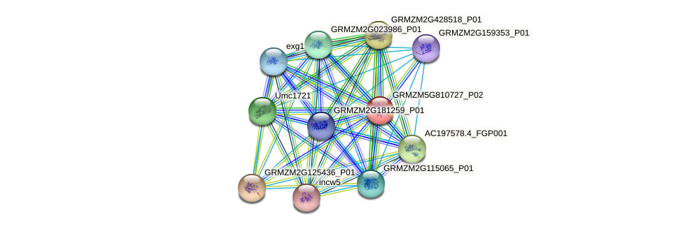 GRMZM5G810727_P02 protein (Zea mays) - STRING interaction network