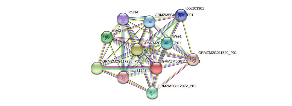 GRMZM5G811034_P01 protein (Zea mays) - STRING interaction network
