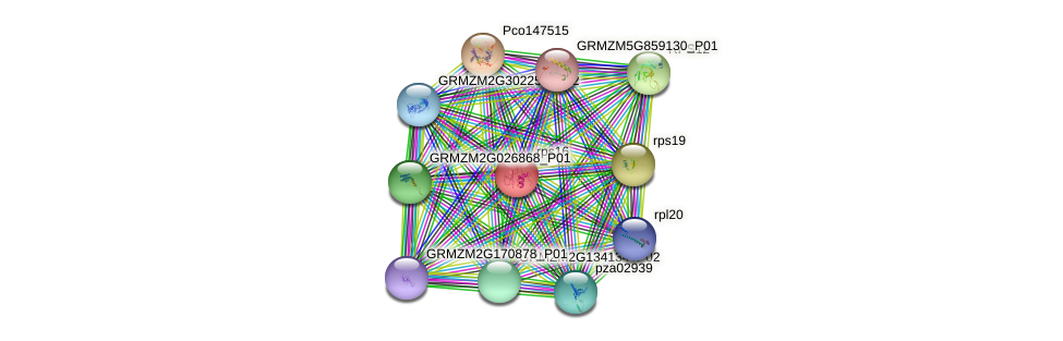 rps16 protein (Zea mays) - STRING interaction network