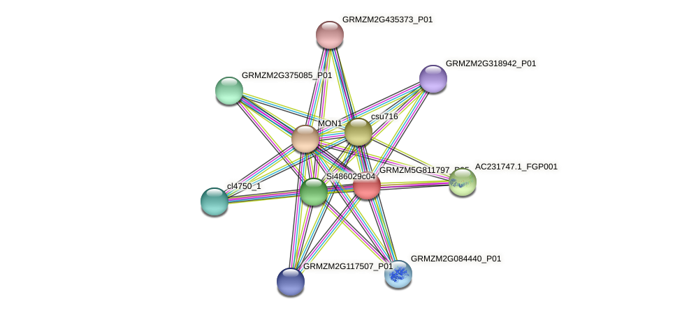 GRMZM5G811797_P05 protein (Zea mays) - STRING interaction network