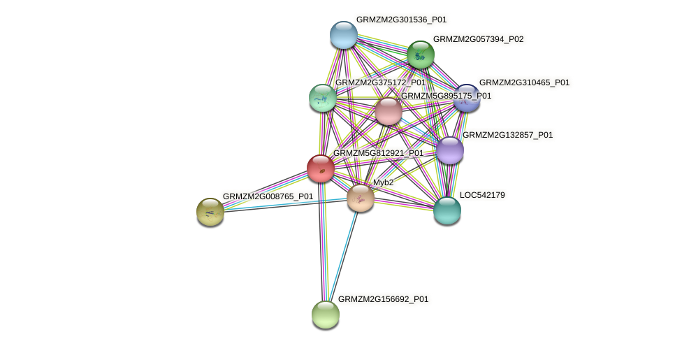 GRMZM5G812921_P01 protein (Zea mays) - STRING interaction network