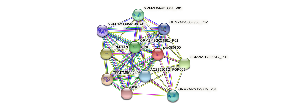 pco080890 protein (Zea mays) - STRING interaction network