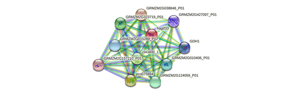 Zm.1964 protein (Zea mays) - STRING interaction network