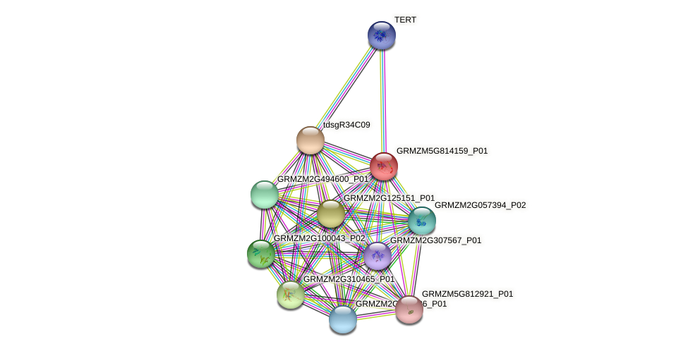 GRMZM5G814159_P01 protein (Zea mays) - STRING interaction network