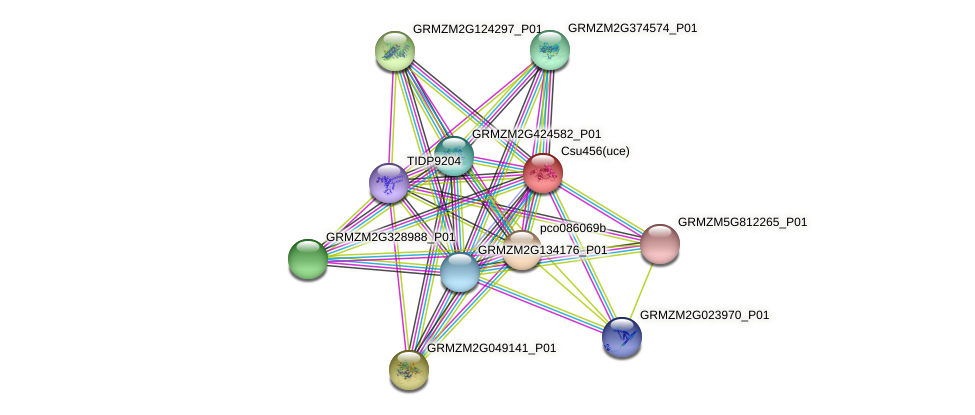 GRMZM5G814314_P01 protein (Zea mays) - STRING interaction network