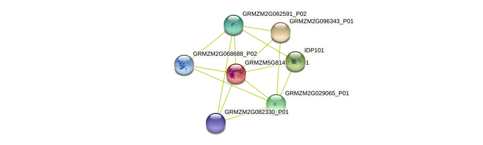 GRMZM5G814549_P01 protein (Zea mays) - STRING interaction network