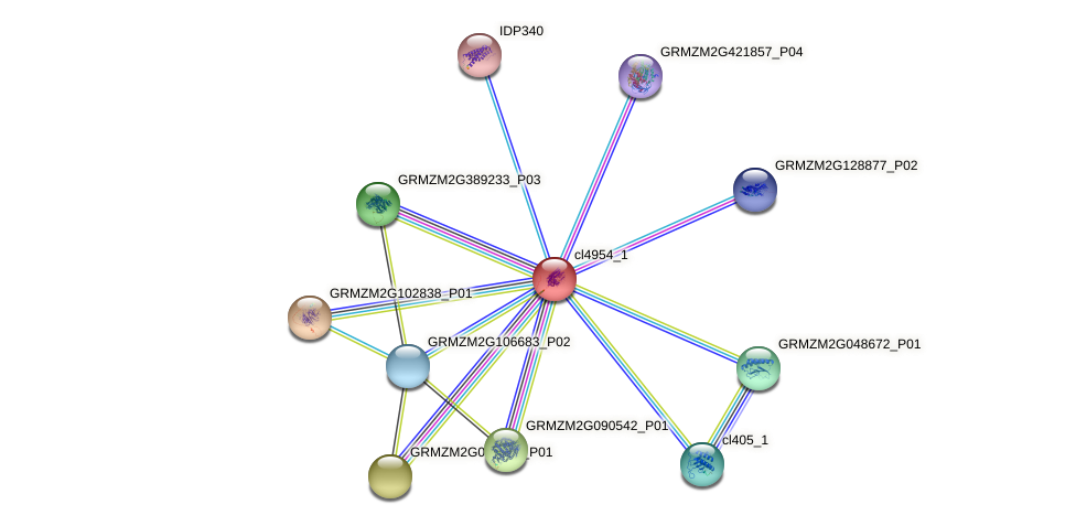 cl4954_1 protein (Zea mays) - STRING interaction network