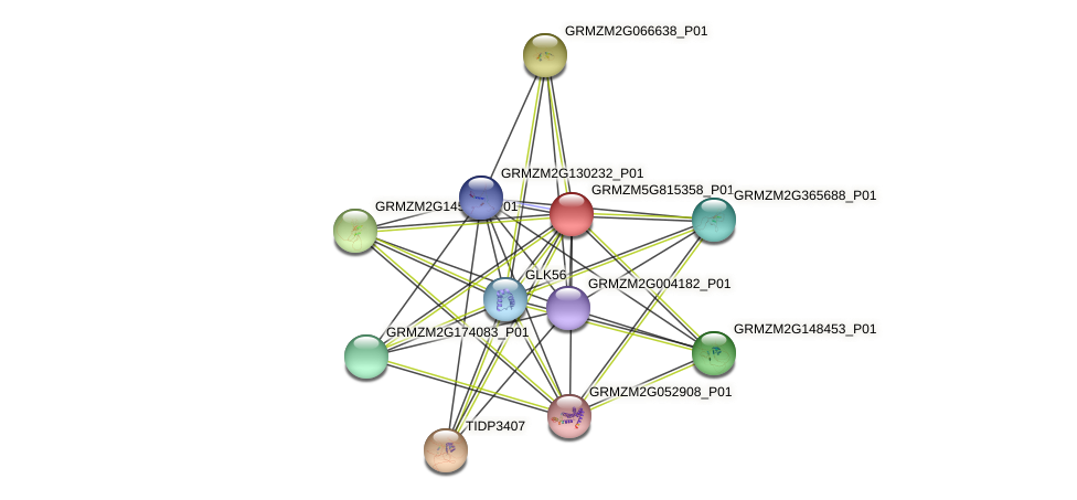 GRMZM5G815358_P01 protein (Zea mays) - STRING interaction network