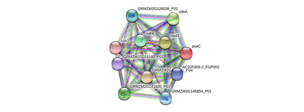 psaC protein (Zea mays) - STRING interaction network