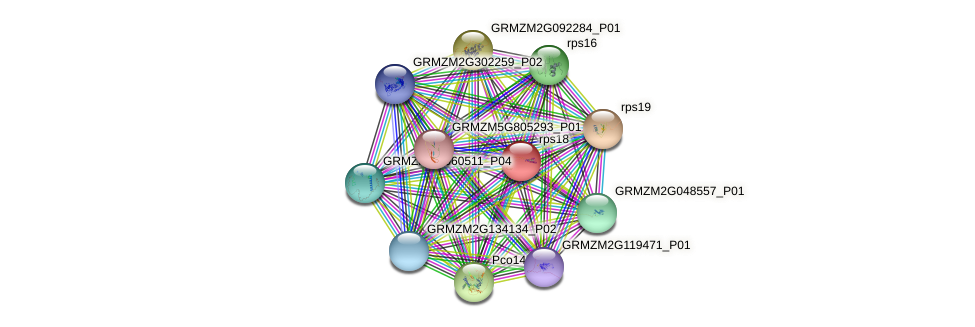 GRMZM5G815606_P01 protein (Zea mays) - STRING interaction network