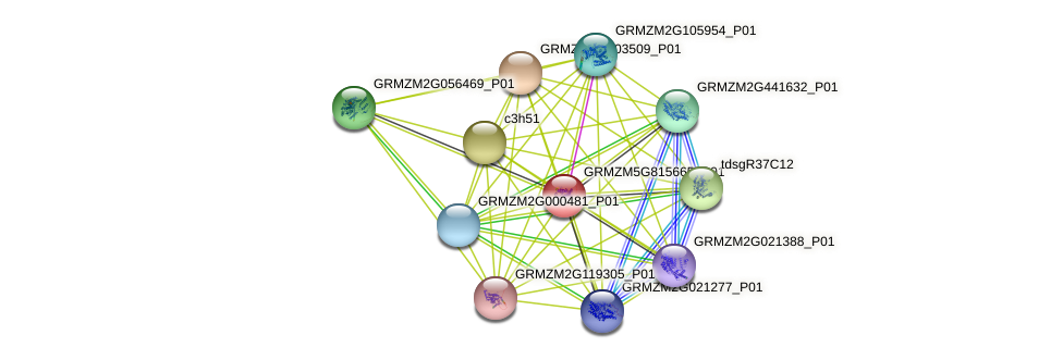 GRMZM5G815665_P01 protein (Zea mays) - STRING interaction network