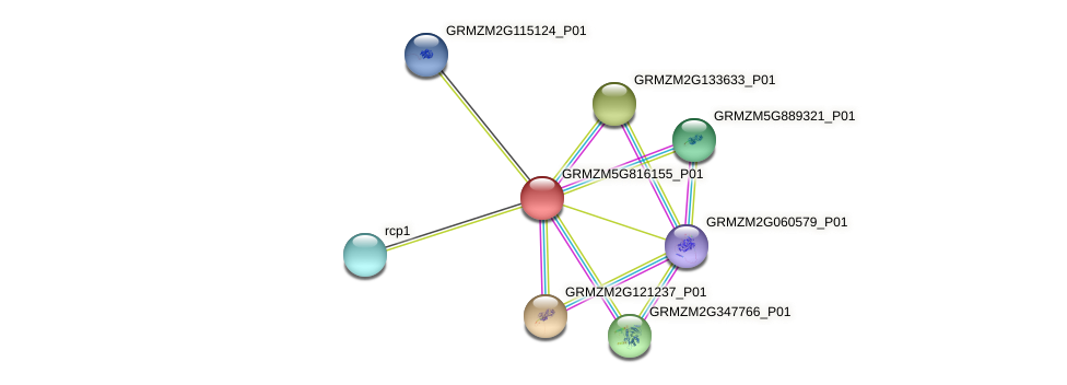 GRMZM5G816155_P01 protein (Zea mays) - STRING interaction network