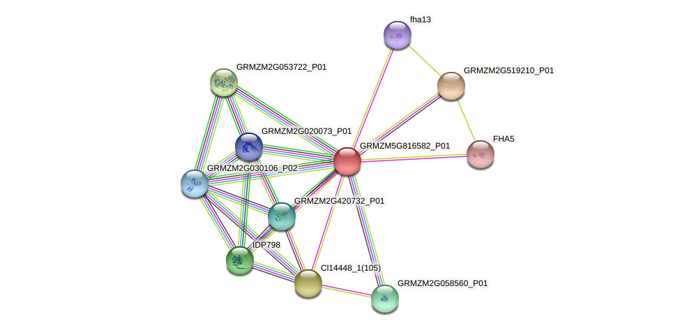 GRMZM5G816582_P01 protein (Zea mays) - STRING interaction network