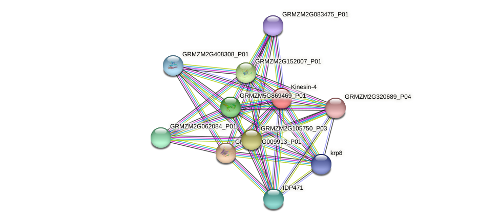 GRMZM5G817395_P02 protein (Zea mays) - STRING interaction network