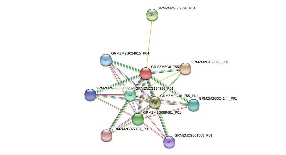 GRMZM5G817559_P01 protein (Zea mays) - STRING interaction network