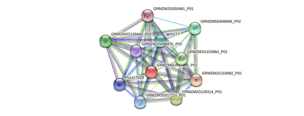 Zm.33261 protein (Zea mays) - STRING interaction network