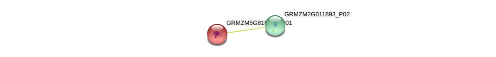 GRMZM5G818106_P01 protein (Zea mays) - STRING interaction network