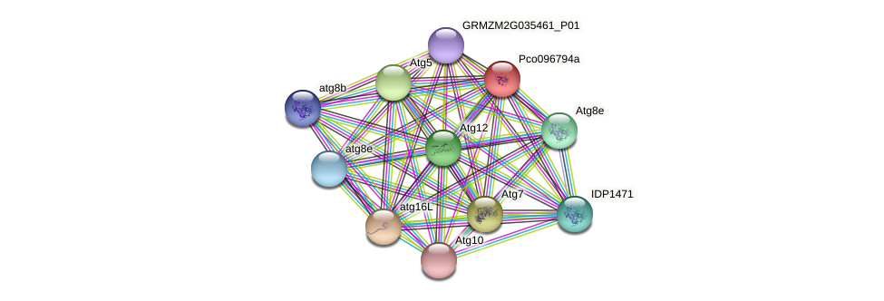 ATG3 protein (Zea mays) - STRING interaction network