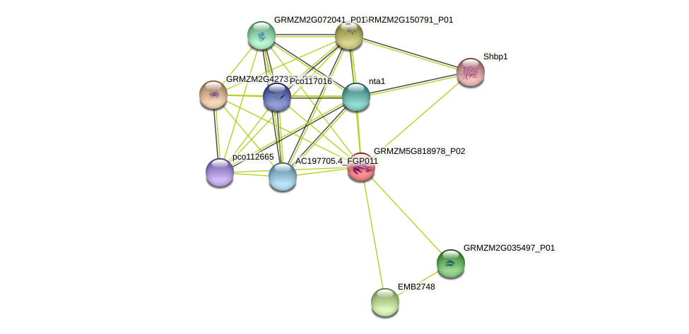 GRMZM5G818978_P02 protein (Zea mays) - STRING interaction network
