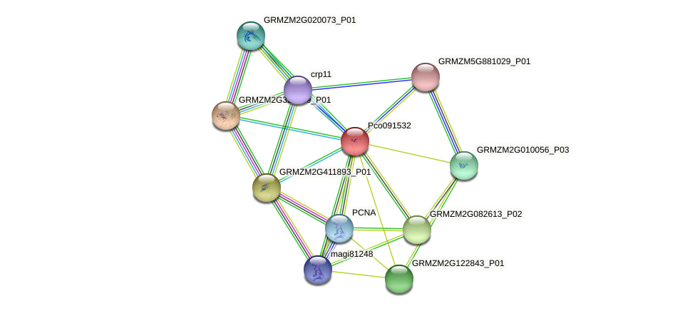 Zm.27720 protein (Zea mays) - STRING interaction network