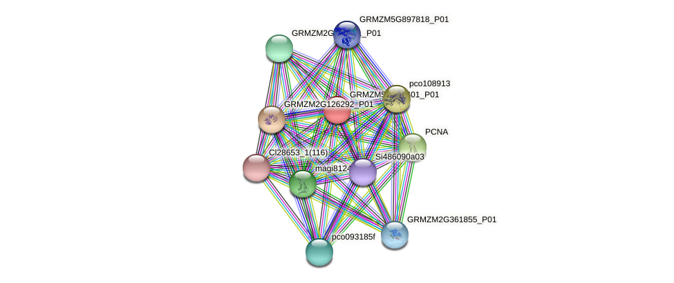 GRMZM5G820401_P01 protein (Zea mays) - STRING interaction network