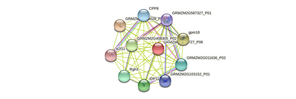 100281777 protein (Zea mays) - STRING interaction network