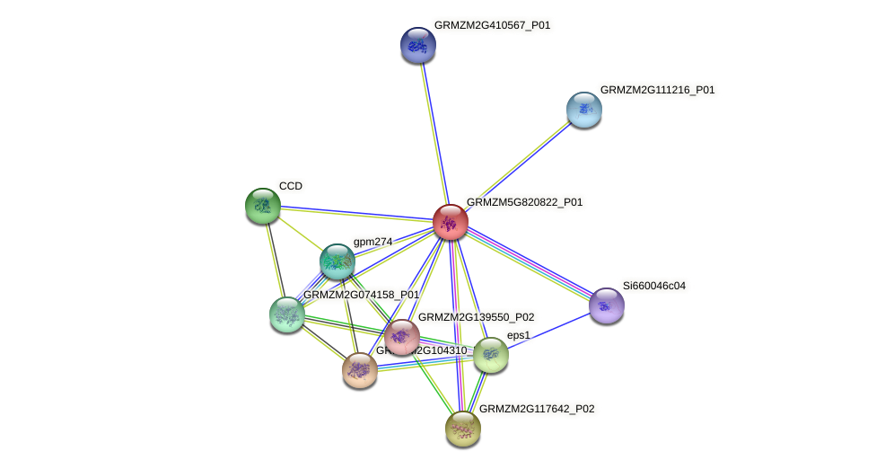 Zm.62997 protein (Zea mays) - STRING interaction network