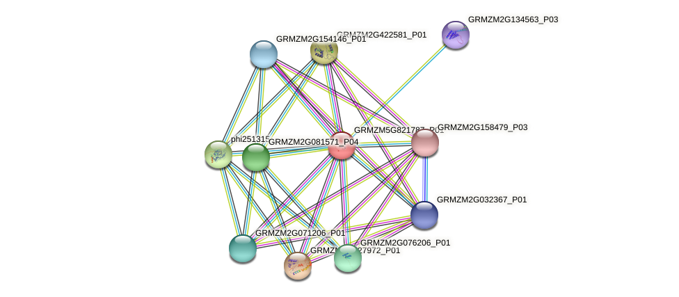 GRMZM5G821787_P01 protein (Zea mays) - STRING interaction network