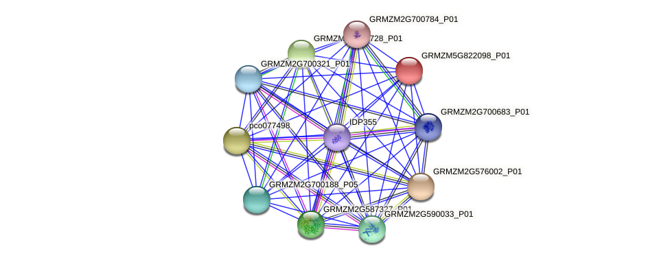 GRMZM5G822098_P01 protein (Zea mays) - STRING interaction network