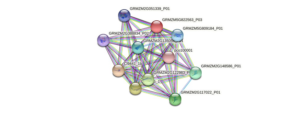 GRMZM5G822563_P01 protein (Zea mays) - STRING interaction network